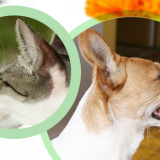 Ear Health in Dogs and Cats: How to care for YOUR pet's ears