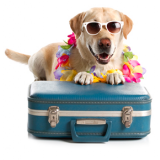 Holiday Pet Travel: Read our Top Travelling Tips for  travelling with your dog or cat