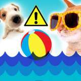 Summer safety tips for dogs and cats: How to keep your pet safe and cool this summer!