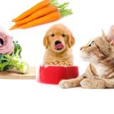 What makes YOU Feel Good? Are you feeding your pet a healthy AND a planet friendly diet?