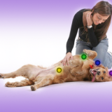 Dog massage: What are the benefits and how to massage your dog
